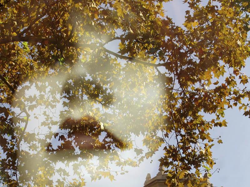 Premis del concurs fotogràfic de Sant Antoni